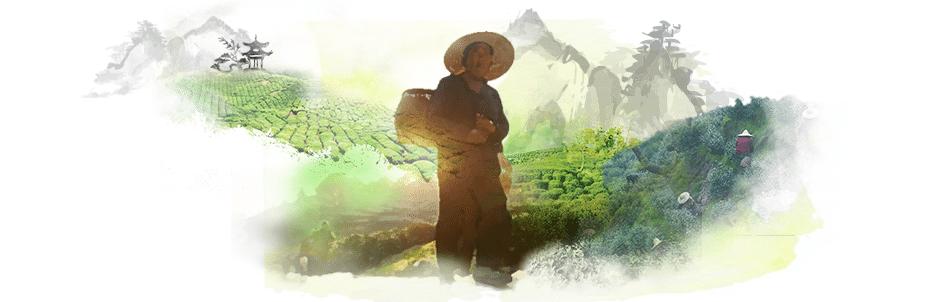 Couv de la campagne 360° Printemps du Thé de notoriété pour le thé de la Pagode, par l'agence de communication digitale Siouxe, à Paris.